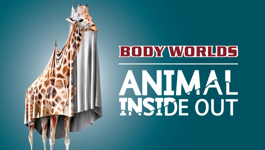 Animals Inside Out Exhibition